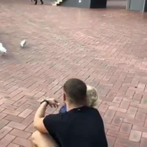 Mirko se asustó en Australia