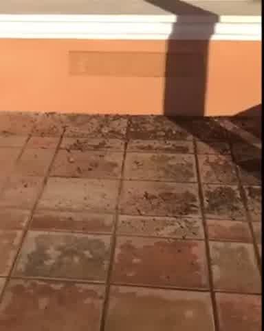 Susana Giménez mostró los destrozos que hizo Rita